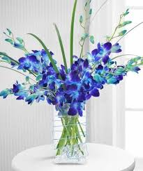 blue orchids true blue orchids floral arrangements city line florist