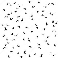doves and pigeons set for peace concept and wedding design flying