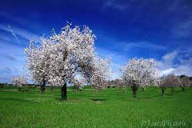 silver trees serri sardinia luca picciau flickr