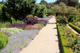california native plant garden design drystonegarden