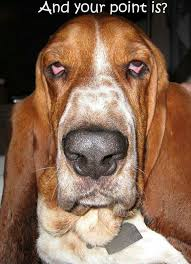 Funny Dog Face Meme - 12 best basset hound memes of all time
