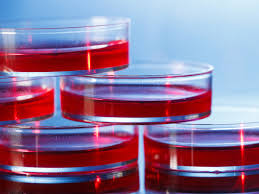 improvements in co2 incubators for cell cultures biocompare the