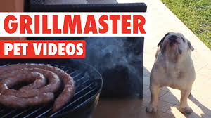 Funny 4th Of July Memes - funny grillmaster 4th of july pet video compilation 2016 youtube