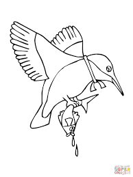 kingfisher animal coloring pages t8ls com