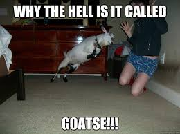 Goatse Meme - why the hell is it called goatse angry goat is angry quickmeme