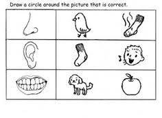 teaching kids sense of sight the five senses the five