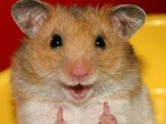 Thumbs Up Meme - thumbs up hamster weknowmemes