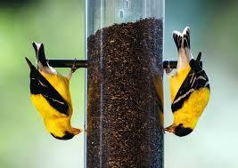 calvin finch are your bird feeders ready to use san antonio