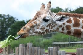 the oklahoma city zoo admission exhibits animals