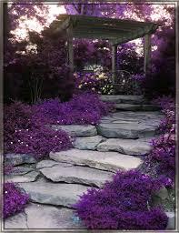 best 25 purple garden ideas on pinterest purple plants purple