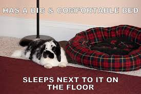 Funny Rabbit Memes - bunny memes bunny approved house rabbit toys snacks and