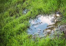 patio drainage problem solve your lawn drainage problems best pick reports
