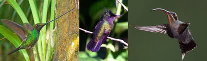 coevolution of hummingbirds and flowers asu ask a biologist