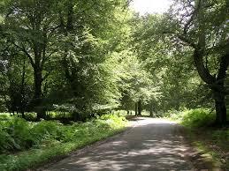 file bolderwood arboretum ornamental drive new forest geograph