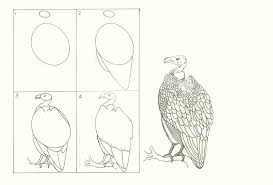 studentsdrawing animal step by step easy outline drawing bird eagle
