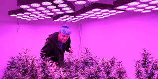 led marijuana grow lights which are the best lights to grow cannabis smokers only