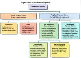 endocrine system concept map psych 03 the nervous system and endocrine system psychology