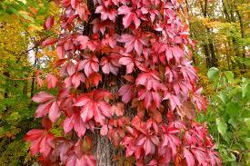 trees uconnladybug u0027s blog