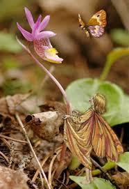 fairies flower fairy garden fairy fairy gardens flower fairies