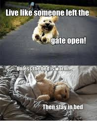 Stay In Bed Meme - 25 best memes about stay in bed stay in bed memes