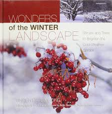 wonders of the winter landscape shrubs and trees to brighten the