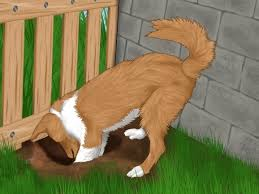 Burying Your Dog In The Backyard Legality Dog In The Backyard Outdoor Goods