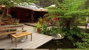 chambre d hote à la réunion accueil les mimosas chambres et table d hôtes de charme grand bassin