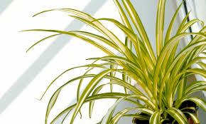 choose some of these great plants for your home mygubbi