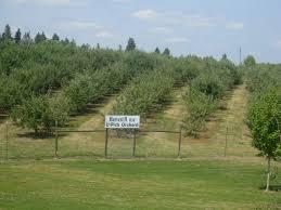 6 beck u0027s harvest house u2013 green bluff growers