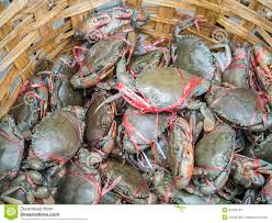 fresh living crabs stock photo image 53750745