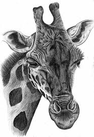 black and white pencil drawings of animals black and white sketch