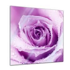 glasbilder 30x30 glasbild lila u2013 u203a preissuchmaschine de