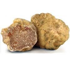 italian white truffle fresh italian white truffles tuber magnatum pico