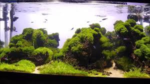 japanese aquascape aquascape moss riccardia moss youtube