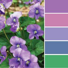 color inspiration an ocean of violets in bloom merriment design