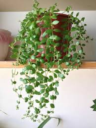 List Of Tropical Plants Names - a z list of house plants common and scientific names what how