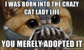 Crazy Cat Lady Memes - cat lady jokes kappit