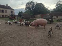 chambre d agriculture 61 chambre d agriculture 61 nouveau repas du soir pour les animaux de