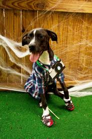 diy dog halloween costume 41 best future pets images on pinterest animals pets and doggies