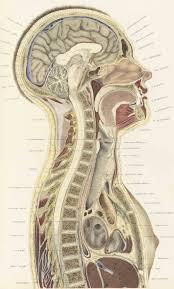 morbid anatomy may 2010