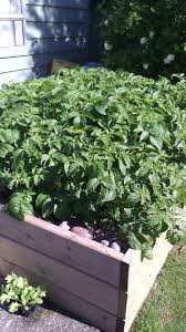 growing vegetables in raised plots an easy way to grow the best
