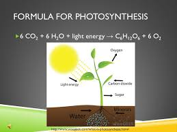 photosynthesis 8th grade science ppt download