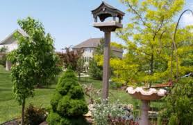 How To Attract Indigo Buntings To Your Backyard Backyard Birds How To Attract Them With The Right Flowers Shrubs