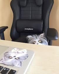 passe c le bureau dxracer only the best of chairs for the best kitt tweet