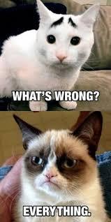 Soon Cat Meme - get better soon puppy google search jokes pinterest grumpy