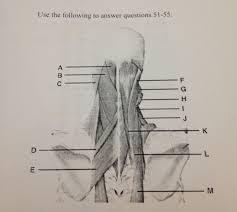 Anatomy And Physiology Online Quizzes Anatomy U0026 Physiology 1 Exam 3 Proprofs Quiz