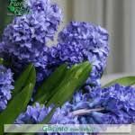 fiori viola come si chiama diamo un nome a fiori e piante fiori e foglie