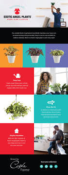 what color light do plants grow best in 22 best colorful houseplants to decorate your home or office images