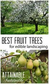Best Trees For Backyard by 25 Best Tree Garden Ideas On Pinterest Driveway Landscaping