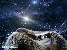 cat universe wallpaper hottest desktop wallpaper for cat lovers band of cats